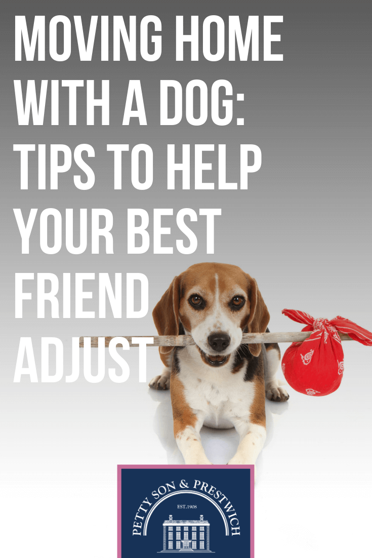 Moving Home With A Dog Tips To Help Your Best Friend Adjust 1