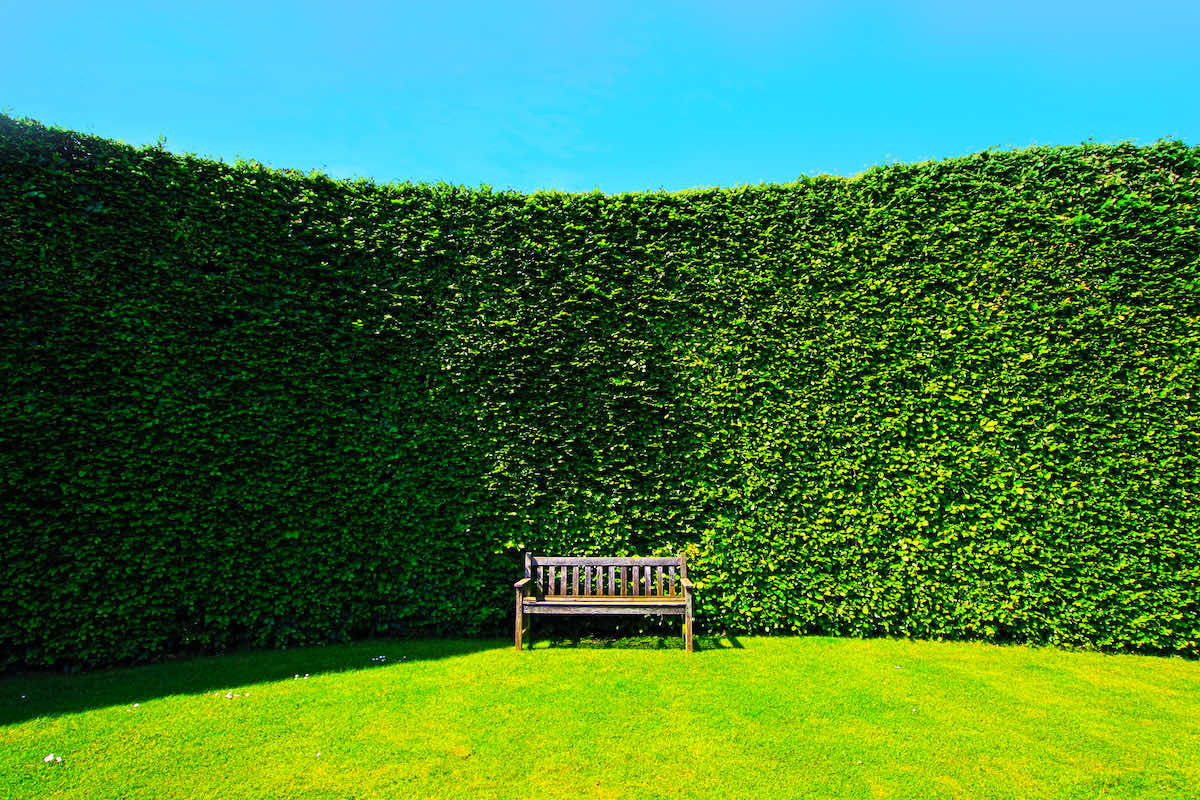 hedges improve garden privacy