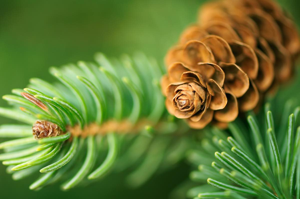 pine scent sells homes